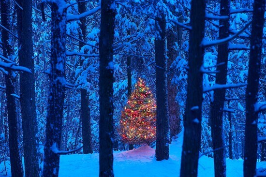 Christmas tree in the forest.