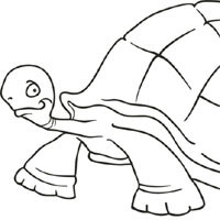 Thumbnail image for Big Tortoise