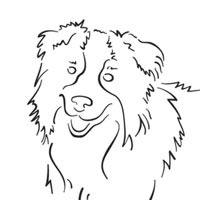 Thumbnail image for Border Collie
