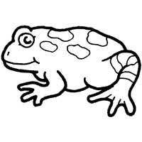 Thumbnail image for Bumpy Toad