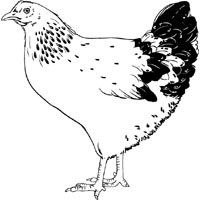 Thumbnail image for Clucking Hen