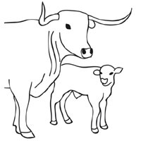 Thumbnail image for Cow and Calf
