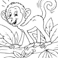 Thumbnail image for Curly Tail Monkey