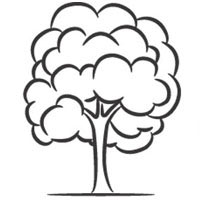 Thumbnail image for Deciduous Tree
