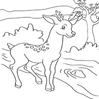 Thumbnail image for Deer and Stream