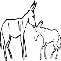 Thumbnail image for Donkey Mom And Foal