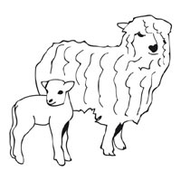 Thumbnail image for Ewe And Lamb