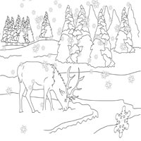 Thumbnail image for Foraging Elk
