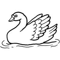 Thumbnail image for Graceful Swan