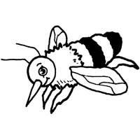 Thumbnail image for Honey Bee