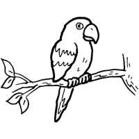 Thumbnail image for Perching Parrot