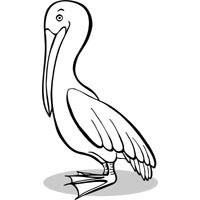 Thumbnail image for Perching Pelican