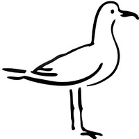 Thumbnail image for Sea Gull