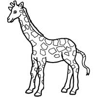 Thumbnail image for Spotted Giraffe