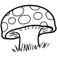 Thumbnail image for Spotted Toadstool