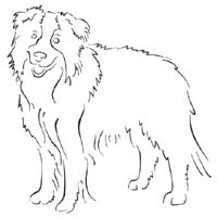 Thumbnail image for Standing Border Collie