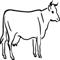 Thumbnail image for Stoic Cow