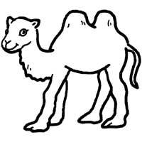 Two Humped Camel