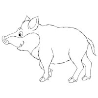 Thumbnail image for Wild Boar
