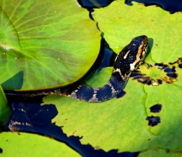 Serpents and Snakes: Old Testament