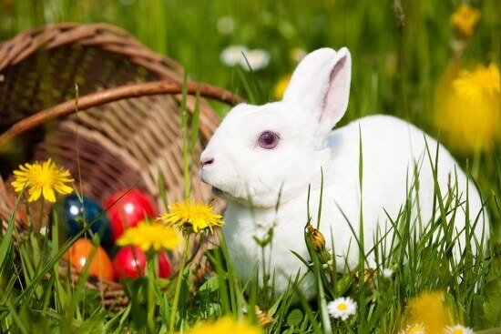 Easter Bunny Meadow