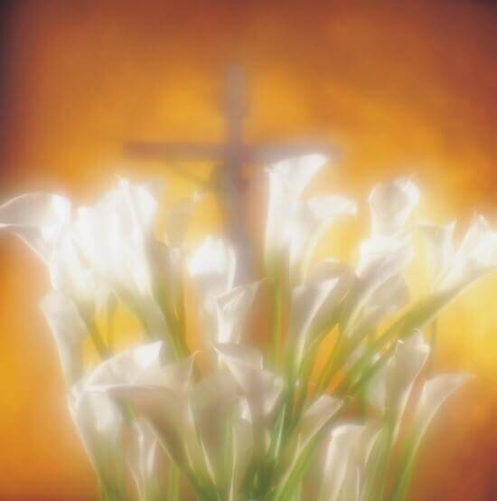 Cala Lily Cross