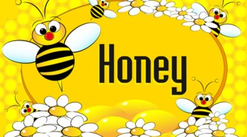 Honey Bee Crossword Puzzle