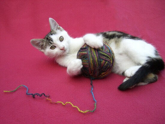 Catplayingwithyarn E