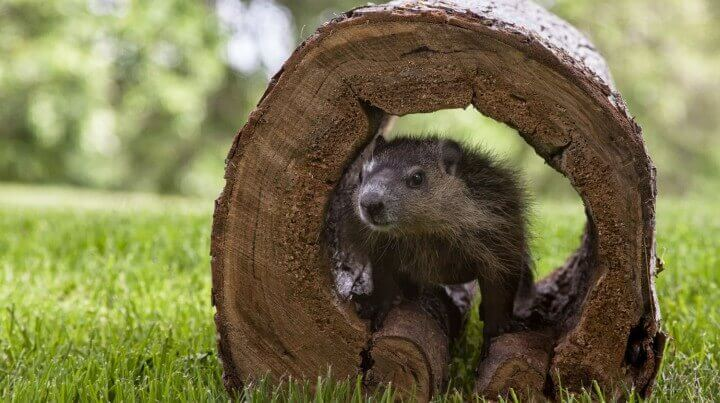 10 Facts about Groundhog Day