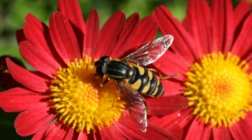Honey Bee Photo Gallery