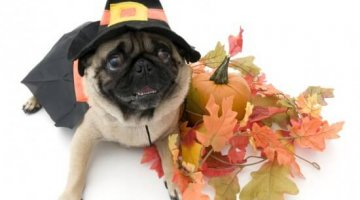 Halloween Safety For Your Pet