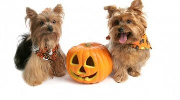 Tips For Pet Safety On Halloween