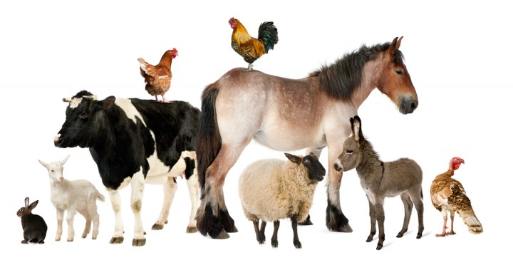 Variety Of Farm Animals In Fro
