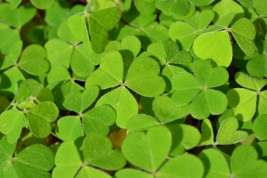 St. Patrick's Day Crafts for Elementary Age Kids