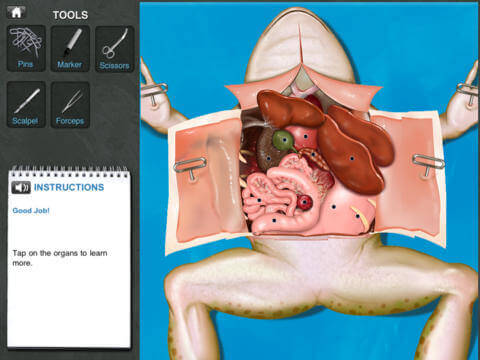 A screenshot from a virtual frog dissection app.