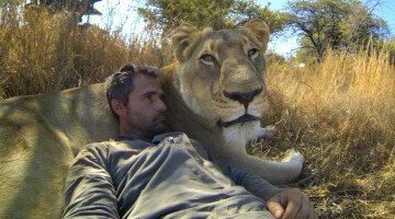 Go Pro: Lions – the New Endangered Species?