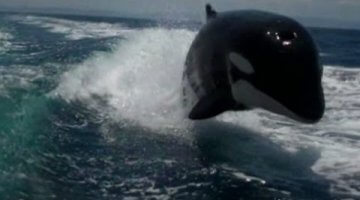 Killer Whales Surprise Couple on Boat