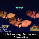 JumpStart Bat Echolocation Song